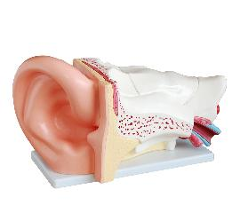 New Style Giant Ear Model 2