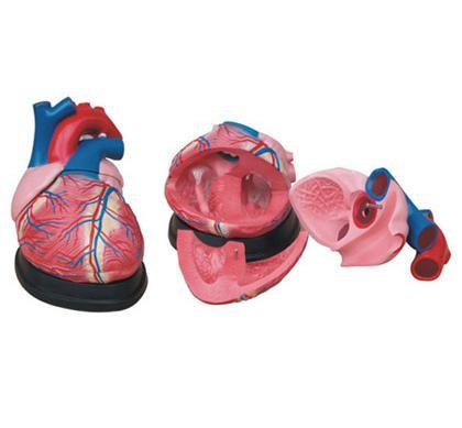 Jumbo Heart Model 1