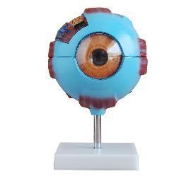 Giant Eye Model 3