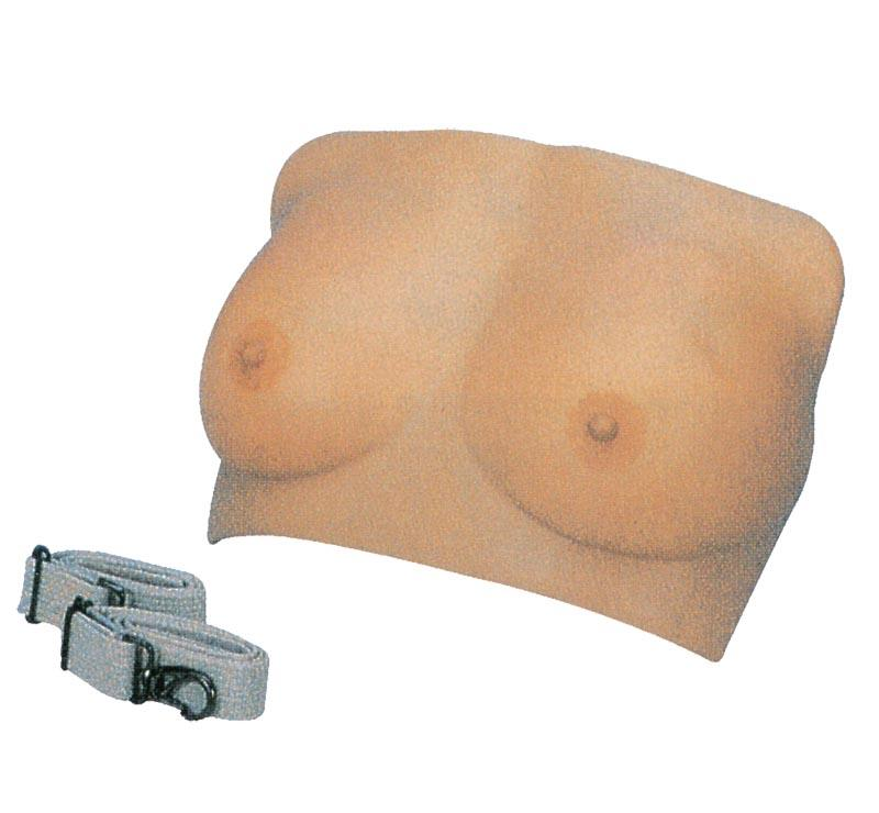 Breast Examination Model 1